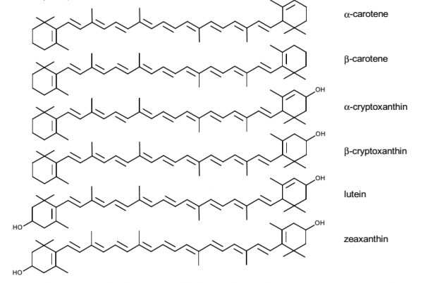 Figure 1: The molecular Structure of major carotenoids in human plasma